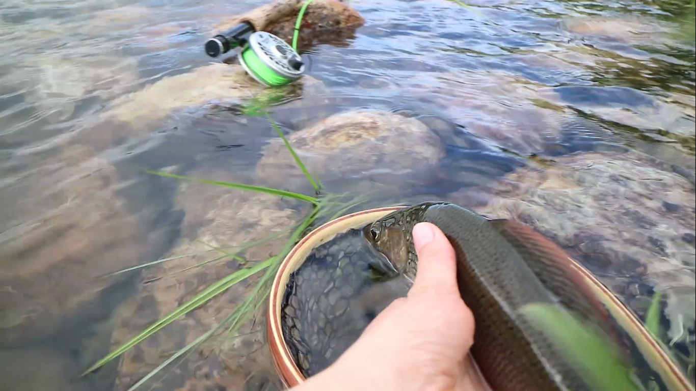 fly fishing basics for dry fly fishing kajana club