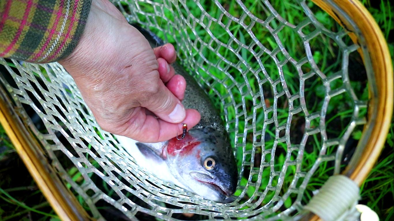 nymph fly fishing