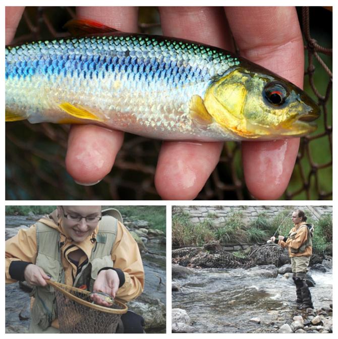 kawamutsu japan flyfishing
