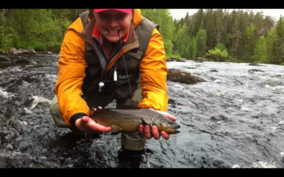 Trout fly fishing in Finland