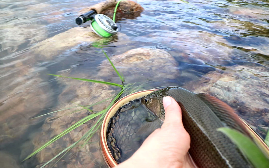 Fly Fishing Basics for Dry Fly Fishing