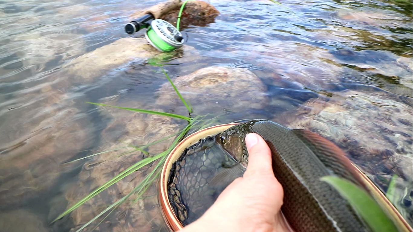 Fly fishing basics for dry fly fishing kajanaclub for Fly fishing 101