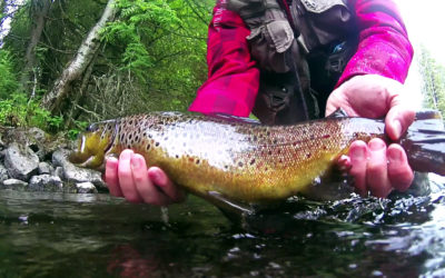 Catching Brown Trout