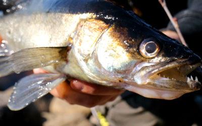 Zander Fishing from Shore