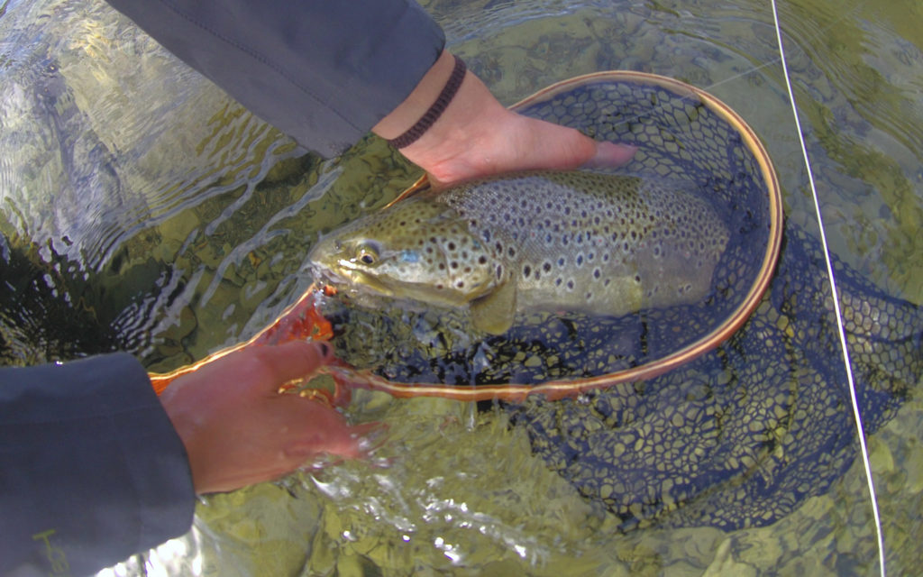 flyfishing trout fliegenfischen Lappland und fliegenfischen Sweden